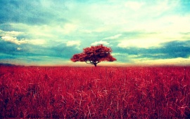 Red Tree and Grass