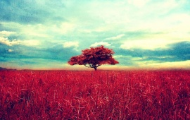 Red Tree On Red Field