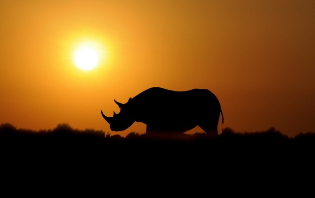 Rhino Sunset (click to view)