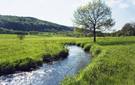 River Way In Green Field
