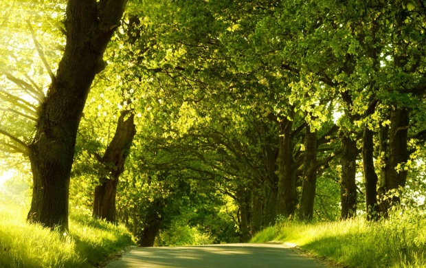 Road Covered with Green Trees (click to view)