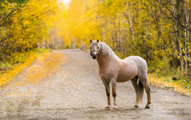Road Horse Autumn (click to view)