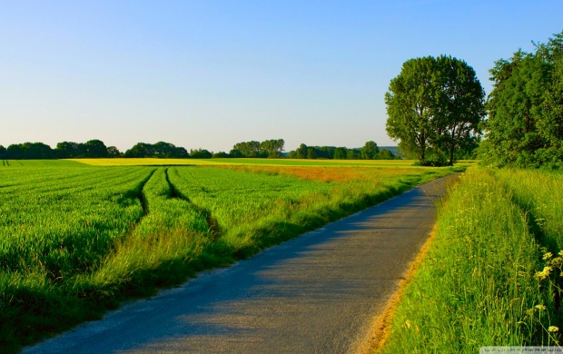 Road Passing a Green Field (click to view)