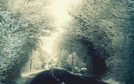 Road Passing Through the Snowy Forest