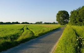 Road Through a Green Field