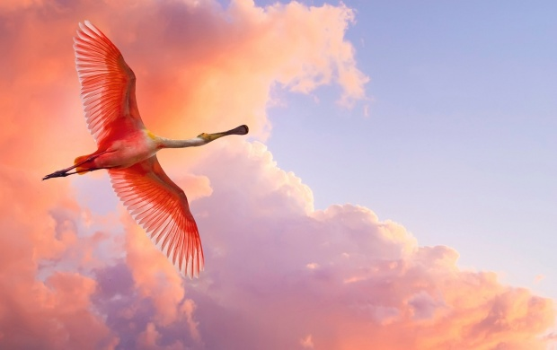 Roseate Spoonbill Bird (click to view)