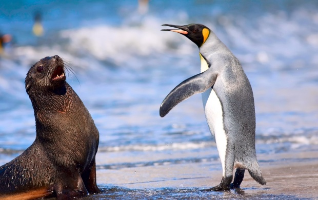 Royal Penguin Antarctic Fur Seal (click to view)