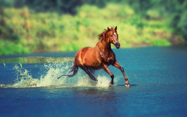 Running Horse In Water (click to view)