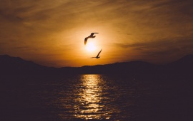Seabird Sunset Sea