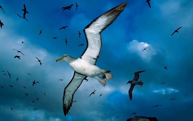 Seagulls Flying In The Sky (click to view)