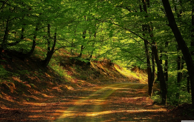 Shady Forest Road (click to view)