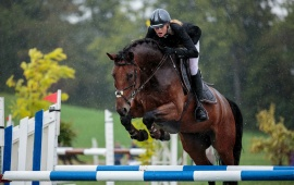 Show Jumping Horse Sports