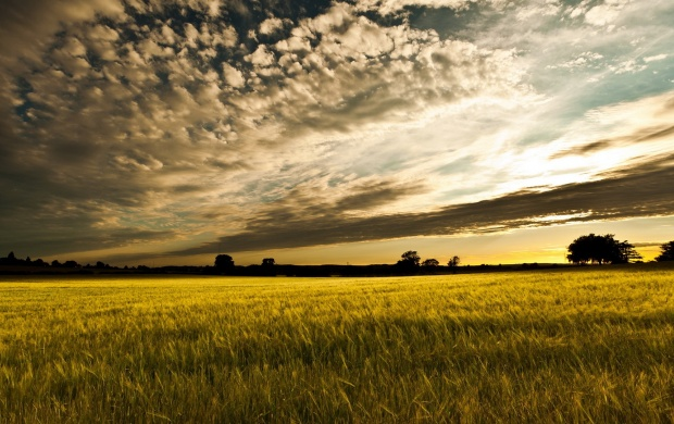 Simple Sunset Field Landscape (click to view)