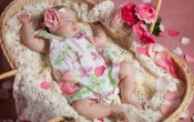 Sleeping Baby And Petals Flowers