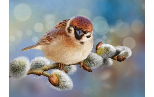 Small Bird On A Branch (click to view)
