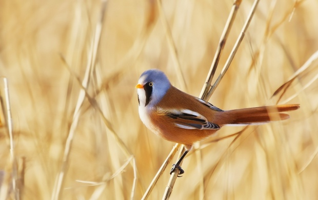 Small Bird on a Straw (click to view)
