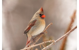 Small Bird With Red Beak