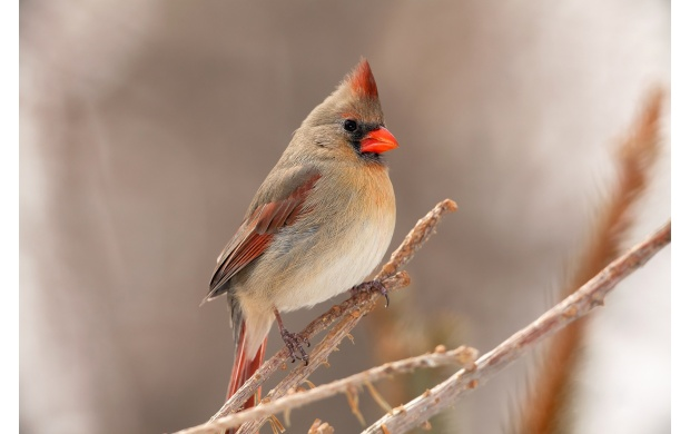 Small Bird With Red Beak (click to view)