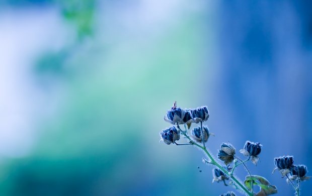 Small Blue Flowers (click to view)