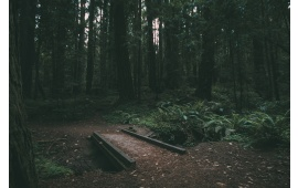 Small Bridge in Dark Forest