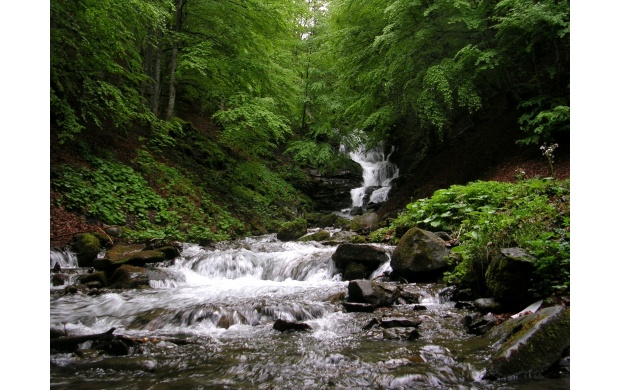 Small Forest Waterfall (click to view)