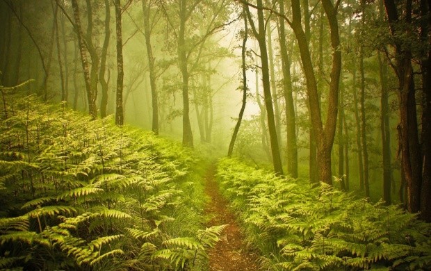 Small Path Through Foggy Forest (click to view)