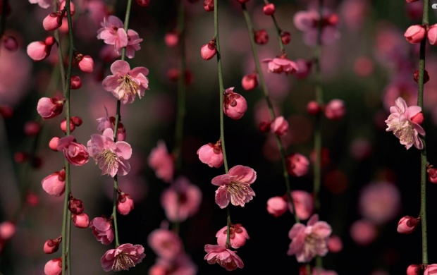 Small Pink Flowers Wallpapers