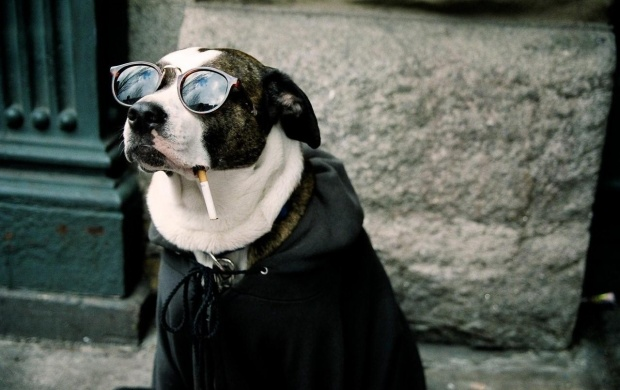 Smoking Dog (click to view)