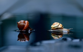 Snail And Acorn Reflection In Water