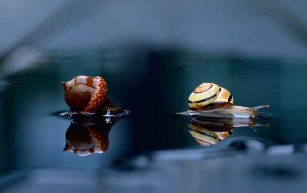 Snail And Acorn Reflection In Water (click to view)