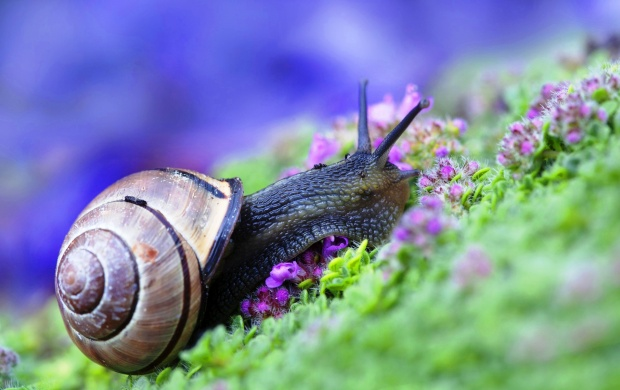 Snail At Grass And Purple Flowers (click to view)