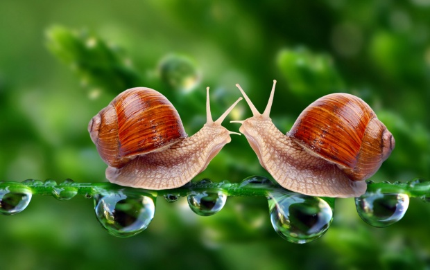 Snail Love (click to view)