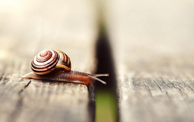 Snail Movement On Boards (click to view)
