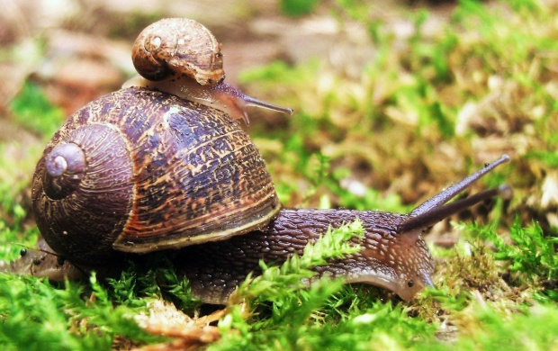 Snail On Snail (click to view)
