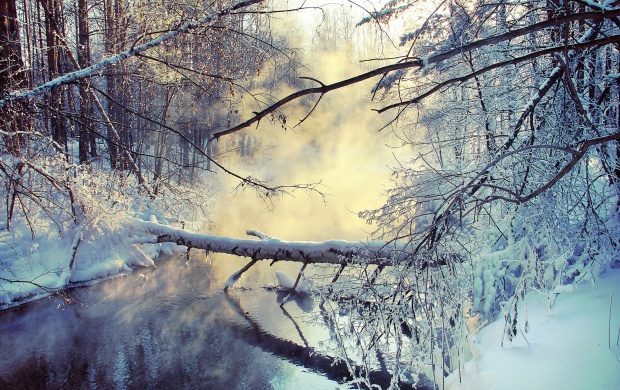 Snow Twigs Stream (click to view)