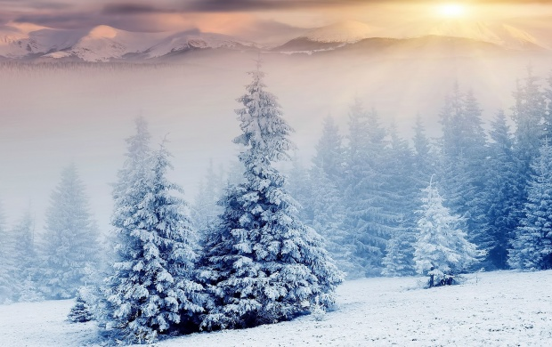 Snowy Mountain Trees (click to view)