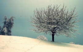 Snowy Tree with Vintage Effect