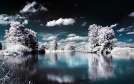 Snowy Trees Lake Reflection