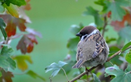 Sparrow Sitting On Branch
