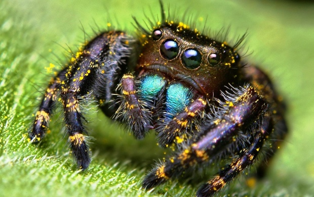 Spider (click to view)