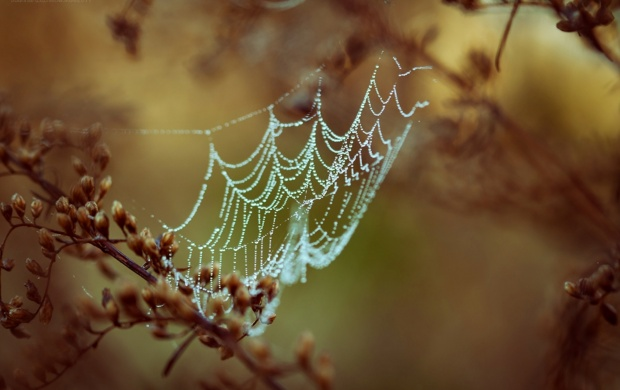 Spider Web In Dew Drops (click to view)