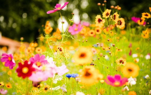 Spring Colorful Flowers (click to view)