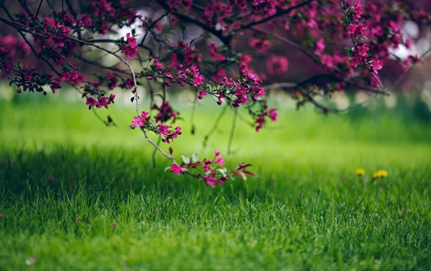 Spring Grass And Flowers Nature (click to view)