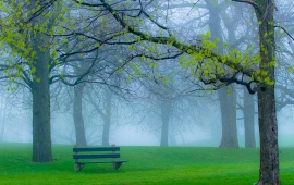 Spring Park Fog And Bench
