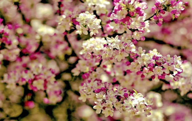 Spring Tree Flowers (click to view)