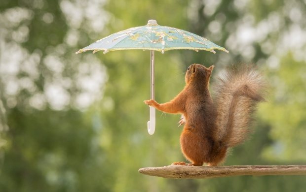 Funny hd wallpapers free wallpaper downloads funny hd desktop 13882 views squirrel hold a umbrellas funny pose voltagebd Images