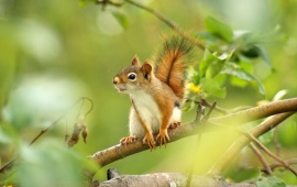 Squirrel Looking