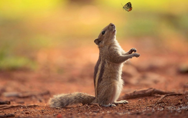 Squirrel Watching Butterfly (click to view)