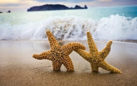 Starfish - Come With Me!