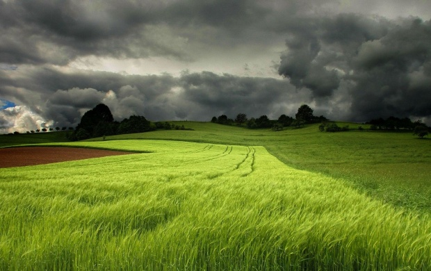 Storm Clouds Over a Green Field (click to view)
